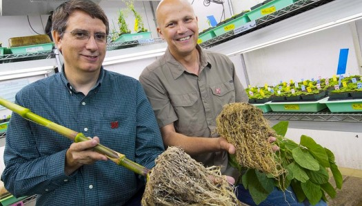 Twigg, Shaffer involved with $20 million crop productivity research