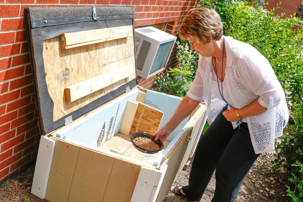Deb Schroeder places food inside one of the seven new cat feeding stations on the UNK campus. (Photo by Corbey R. Dorsey/UNK Communications)