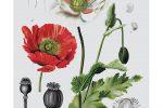 GOLD - Maggie Pierson – Elements of Advertising – Poppy Scientific Illustration