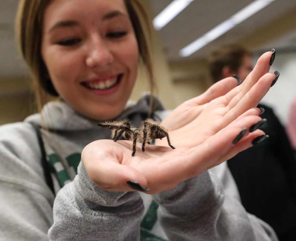 Emma Sutko, a senior at Lincoln Pius X High School, addresses her fear of spiders Tuesday during a psychology fair at UNK. More than 300 students from 30 high schools attended the event. (Photo by Corbey R. Dorsey, UNK Communications)