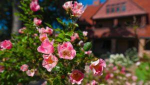 Campus Flowers 12