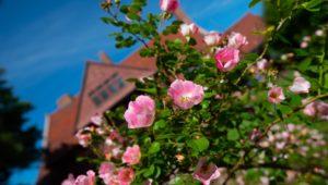 Campus Flowers 15