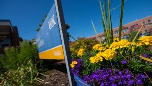 Campus Flowers 17