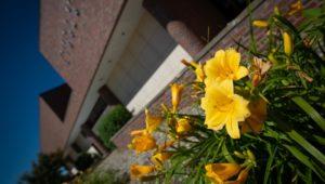 Campus Flowers 2