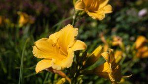 Campus Flowers 20
