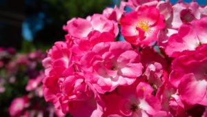 Campus Flowers 21