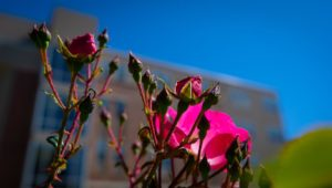 Campus Flowers 23