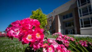 Campus Flowers 24