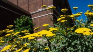 Campus Flowers 26