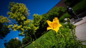 Campus Flowers 3