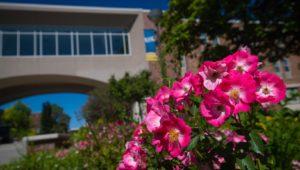 Campus Flowers 5