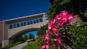 Campus Flowers 6