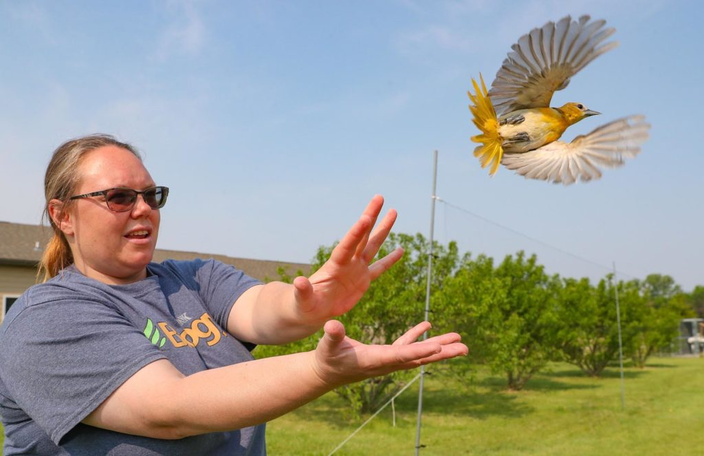 UNK associate professor of biology Letty Reichart releases an oriole after the bird was documented last week during a research project along the Platte River near Gibbon. Reichart and her students have been studying orioles and their migration habits since 2015. (Photo by Corbey R. Dorsey, UNK Communications)