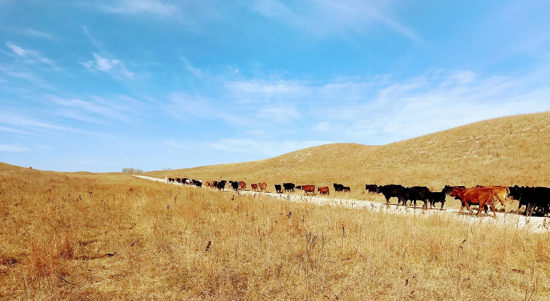 The McNeil family cattle ranch in the Nebraska Sandhills.