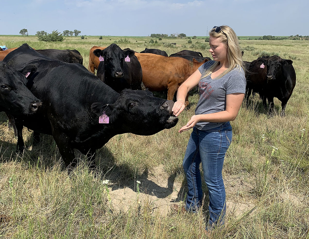 Korinne Hansen hand-feeds cattle at her family's farm north of McCook. Hansen's love of agriculture inspired her to study pre-veterinary medicine at UNK. (Courtesy photos)