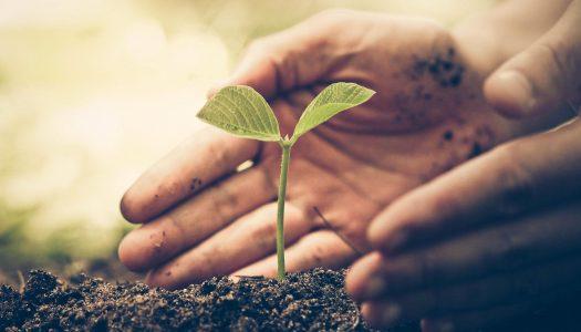 Garden Planting Photo