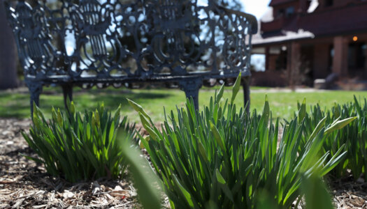 3-28 Spring campus photos-16