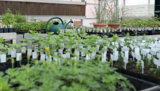Spring plant fundraiser-06